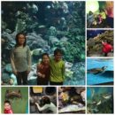 shedd1Collage