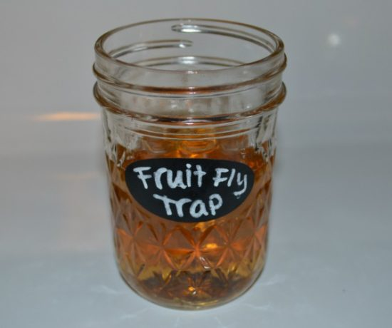 Easy DIY Fruit Fly Trap